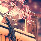 Pink Plum Blossoms with Bamboo Fence and Pagoda by Beverly Claire Kaiya
