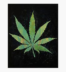 Pot Leaf Photographic Print