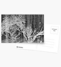 Snow Storm 2 Postcards