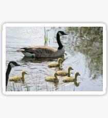 Canada Geese (Branta canadensis) Sticker