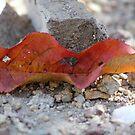 Fall Leaf by Jazzy724