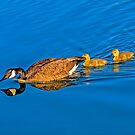 Mother and Goslings by George I. Davidson
