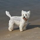 "Beach Dog ""Scotty"" by aussiebushstick"