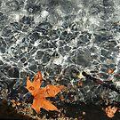 Water-Leafs by Gavin Kerslake