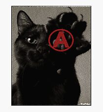 ALL CATS ARE BEAUTIFUL by ROOTCAT Photographic Print