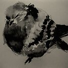 fat pigeon by Alfred Gillespie