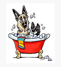 German Shepherd & Boston Terrier in the Bath Photographic Print