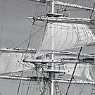 White Sails by Stephen Mitchell