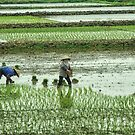 Vietnam: All in A Row by Kasia-D