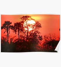 Sunrise in the Okavango Delta Poster