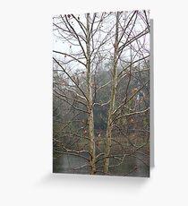 Sycamore Lake Greeting Card