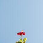 Above by Josie Eldred