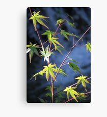Green Japanese Maple Canvas Print