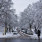 After the Ice Storm--Beautiful But Destructive Ice and Snow by Gerda Grice