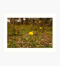 Yellow Button Flowers, Sinclairs Gully, Norton  Summit, Adelaide Hills Art Print