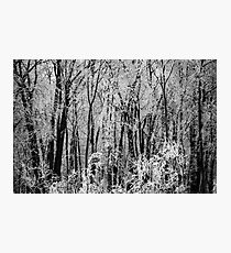 The Elfish Forest Photographic Print