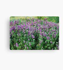 Purple Herbs Canvas Print