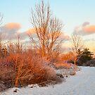 Winter Meadow by Nancy Barrett