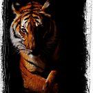 Bengal Tiger by Dennis Stewart