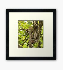 Thinking what to do? Framed Print