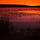 Lake Kurwongbah sunset Australia by PhotoJoJo