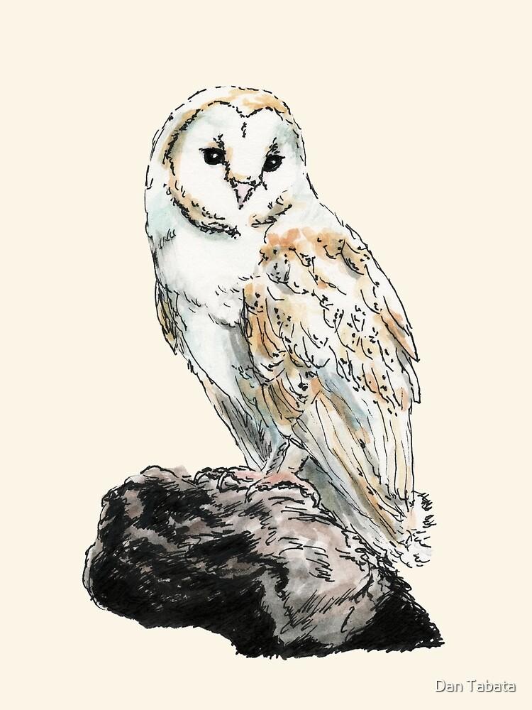 Barn Owl by Dan Tabata
