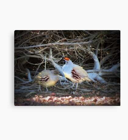 Gambels Quail~ Father w/ Chick Canvas Print