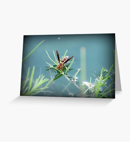 Sipping Paper Wasp  Greeting Card
