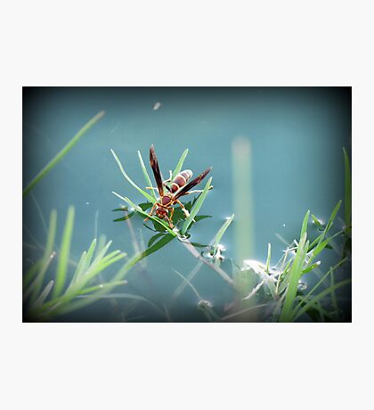 Sipping Paper Wasp  Photographic Print