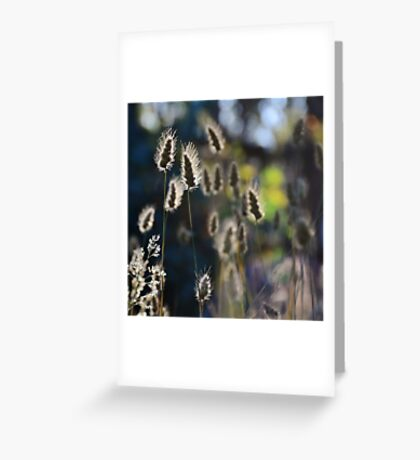 Graceful Grasses 2 Greeting Card