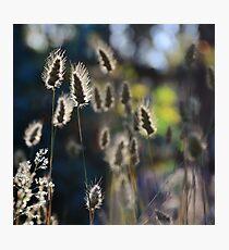 Graceful Grasses 2 Photographic Print