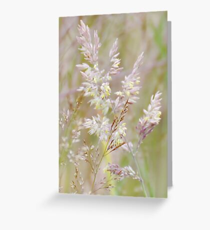 Graceful Grasses 3 Greeting Card