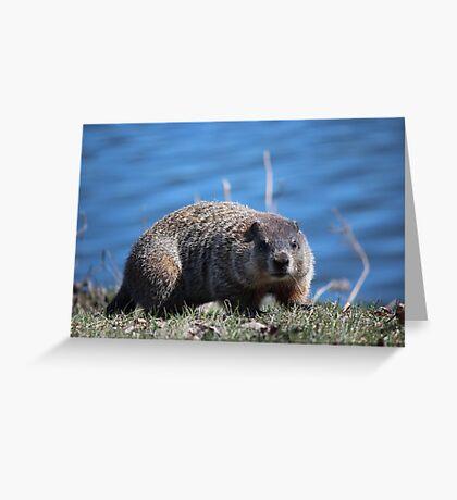 Groundhog Pose Greeting Card