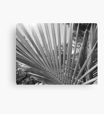 Palm Tree Fronds Canvas Print