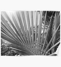 Palm Tree Fronds Poster