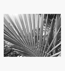 Palm Tree Fronds Photographic Print