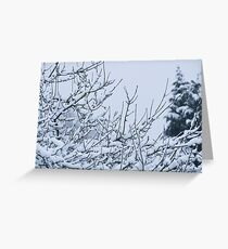Snow Laden Branches Greeting Card