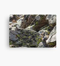 Alone on the Rocks Canvas Print