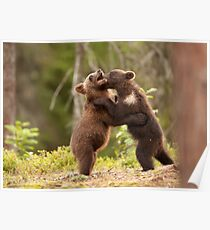 Brown Bear Cubs Play Fighting Poster