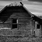 The Once Loved Shack by Mark Iocchelli