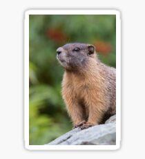 Marmot Portrait Sticker