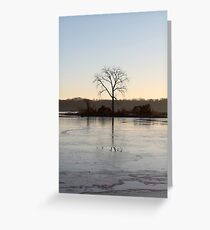 Bald eagle roost Greeting Card