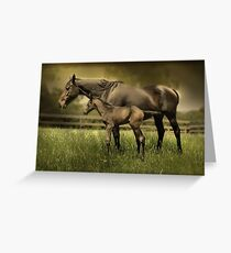 New Foal and Mare Greeting Card