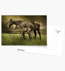 New Foal and Mare Postcards