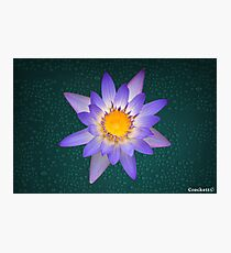 Water Lily Purple and Yellow Pastel Colors Natural Photographic Print