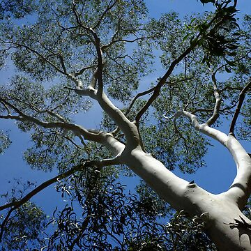 Standing Tall - Sinclair's Gully, Norton Summit, Adelaide Hills by ChateauGlenunga