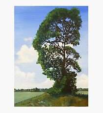 Landscape with Tree Photographic Print