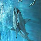 great White Shark by Mikeb10462