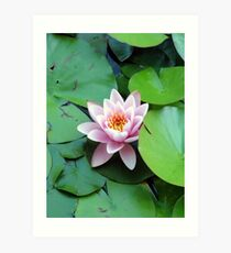 Pink in the pond Art Print