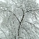 Tree Blooming With Snow  by Jane Neill-Hancock